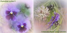 This lesson was learning how to use the selection tools. With them we were to create a pansy composite photo with an image provided. It inspired me to take a couple of bee photos, along with some selections from some sunrise photos faded for the background, to create something fun.