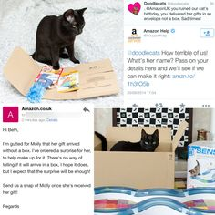 Amazon ruined our cat's birthday but look how they made it up to her :D http://ift.tt/1vRj2au