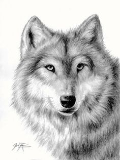 Wolf pencil drawing limited edition print by ONETA by 2ndMoon, $30.00