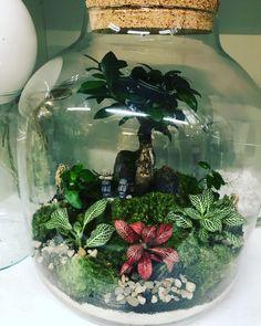 Mini Terrarium, Air Plant Terrarium, Garden Terrarium, Succulent Gardening, Succulents Garden, Garden Plants, House Plants Decor, Plant Decor, Indoor Water Garden
