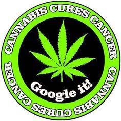 Cannabis cures Cancer! Google #1Cure4Cancer | www.mycutcorep.com/JamesTaylor