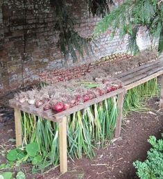 Beautiful Vegetable Garden 5