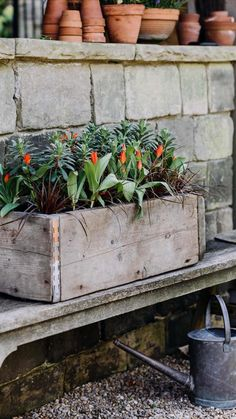 Container Plants, Container Gardening, Wooden Planters, Planter Pots, Red Flowers, Spring Flowers, Planting Tulips, Garden Nursery, Most Beautiful Gardens