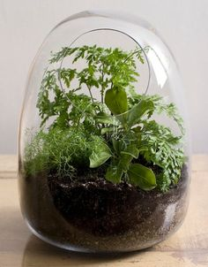 hand-blown terrariums from Bevara