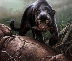 A black leopard in an Ethiopian Highland Forest setting. Description from fuz-caforio-art.deviantart.com. I searched for this on bing.com/images