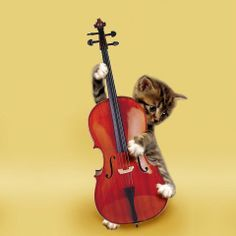 Cat Playing Violin A cat playing the cello