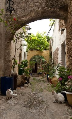 Cat alley.. in the Old City of Rhodes Island, Greece (by Jeff van der Wees on Flickr)