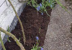 Tørt og vrient blomsterbed langs husveggen, hva gjør jeg?