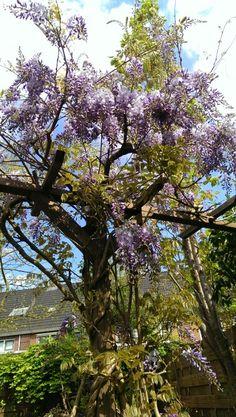 2014 紫藤 Passen06