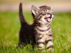 Katzenbabys: Tapsige Samtpfoten
