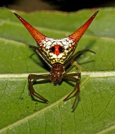 Related image Spider, Insects, Google Search, Image, Spiders