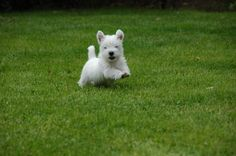 Pouncing puppy!!
