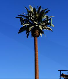 Palm Tree Cell Tower. Can you find more like these?