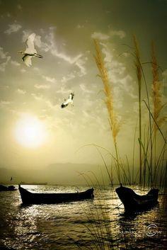 Cranes Under the Sun  jj