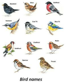 Bird Select Type & Size Waterslide Ceramic Decals Bx in Crafts, Sculpting, Molding & Ceramics, Ceramics & Pottery, Ceramic Decals Tropical Birds, Colorful Birds, Pretty Birds, Beautiful Birds, Rainbow Diy, Vogel Illustration, Bird Identification, Bird Sketch, Bird House Kits