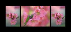 The Tender Spring Blooms. Triptych on Black by Jenny Rainbow. Collection The Teneder Spring Blooms. The tender feel of soft sweet spring in your home all year round. Big size prints are available. Art Prints For Home, Home Art, Fine Art Prints, Framed Prints, Framed Art, Triptych Art, Japanese Flowers, Rainbow Art, Spring Blooms