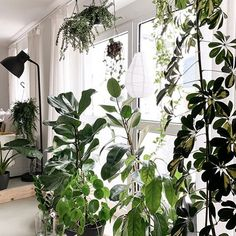 Tamara (@my_green_home_and_me) • Instagram-Fotos und -Videos Plant Leaves, Videos, Green, Plants, Instagram, Home, Planters, Video Clip, Haus