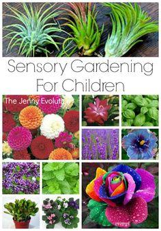 Sensory Gardening: What fun for kids to build on these sensory garden ideas to make one of their own!