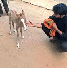new member in ram charan family
