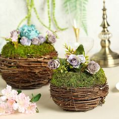 Buy All-Natural Preserved Moss Decoration Supplies and Craft Supplies from Tablecloths Factory. Stock Up on Moss Planters, Moss Grass, Moss Balls, Moss Fillers and more! Driftwood Wedding Centerpieces, Moss Centerpieces, Planter Box Centerpiece, Planter Boxes, Planters, Green Wedding Decorations, Wedding Themes, Moss Decor, Green Basket