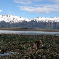 Bitter Clamming Alaska