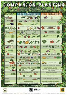 table showing what type of vegetables grow well together