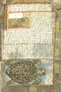 The Fishbook - Scheveningen Adriaen Coenensz, 1577-1580