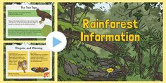 This Rainforest Information PowerPoint features lots of great information to support your teaching of this topic. Rainforest Project, Tree Tops, Geography, Worksheets, Teaching, Forests, Layers, Google Search