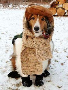 #cute #dog #snow