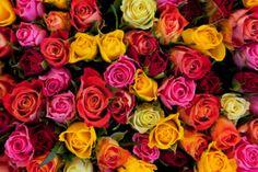Valentin napi üdvözlőlapok – Cardex