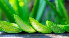 Ptačinec žabinec: Urputný plevel je skvělý základ na salát nebo pesto   BydlímeKvalitně.cz Kiwi, Aloe Vera, Celery, Pesto, Fruit, Vegetables, Veggie Food, Vegetable Recipes, Veggies