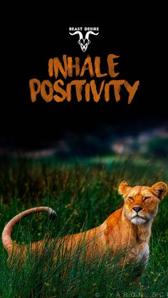 Inspirational Lion Quotes, Motivational Quotes Wallpaper, Wallpaper Quotes, Beast Wallpaper, Locked Wallpaper, Powerful Quotes, Strong Quotes, Desire Quotes, Beast Quotes