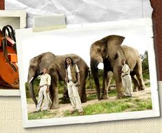 The Supply Company - See our range South Africa, Maine, Elephant, Travel, Animals, Viajes, Animales, Animaux, Elephants