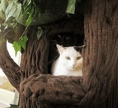 Can you see both the cute kitties? ..Amazing Cat Trees...www.aHiddenHollow.com