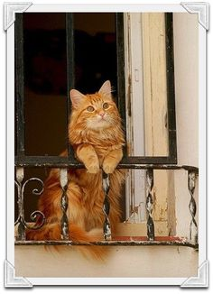 Cat in Venice, Italy