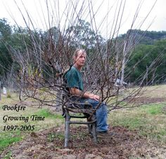 shaping living trees | ... chair when you can just ask the tree to grow in the shape of a chair