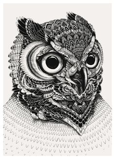 owl face part 1 Art Print by Iain Macarthur