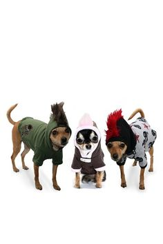 Camo Mohawk Hoodie - OY these poor dogs!!