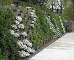 plant coverings best retaining wall cover ideas images on retaining walls ground cover plants and landscaping ideas plant coverings for frost Garden Retaining Wall, Gabion Wall, Retaining Walls, Retaining Blocks, Vertikal Garden, Landscape Design, Garden Design, Screen Plants, Hillside Landscaping
