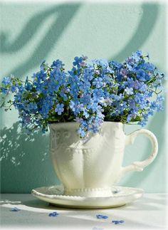 forget me nots Beautiful Flower Arrangements, Floral Arrangements, Fresh Flowers, Beautiful Flowers, Spring Flowers, Pot Jardin, Forget Me Not, Flowers Nature, Flower Photos