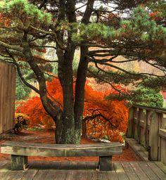 Zen 禅 by avirus, via Flickr
