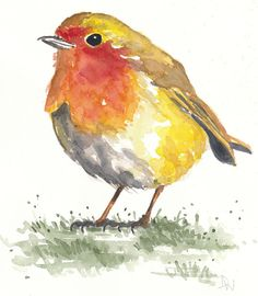 Robin dans lherbe  aquarelle originale  8 x 10