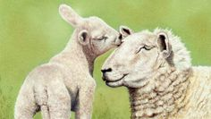 Mother and Baby Lamb [Video Course] | Learn to draw this Mother and Baby Lamb using Pastel Pencils. Video Course.