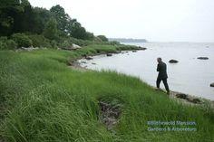 Fergus cruising the Narragansett shore