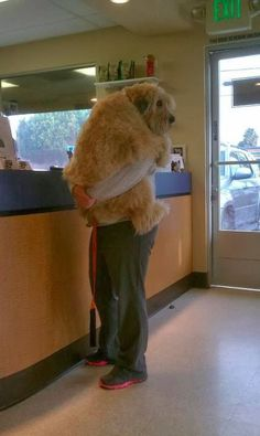 These dogs are huge :D lmao why is he holding it like its a child? And furthermore why is the dog holding onto the man like he is a child?!?