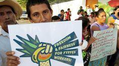 Appell an Aldi: Menschenrechte vor Profit ! Beschäftigte des Aldi-Zulieferers Fyffes in Honduras und Costa Rica arbeiten unter teils katastrophalen Bedingungen, Gewerkschaften werden unterdrückt. Aldi muss dafür sorgen, dass die Arbeiter/innen auf seinen Zulieferer-Plantagen für faire Arbeitsbedingungen eintreten können!