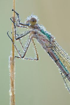 Too. Cool.    Droplets on dragonfly ... by Johannes Klapwijk, via 500px