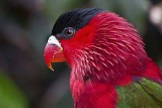 Un animal precioso y con unos colores muy vivos que hacen que no podamos dejar de admirar su belleza. Podréis encontrarlos en el Loro Parque de Tenerife! #vacaciones #buscounchollo #tenerife