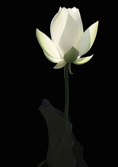 Lotus Flower {ELO~~~ turn it upside down and its YOUR lamp.... at night!!!}