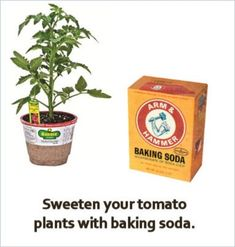 Sweet Tomatoes - Just add baking soda! Just sprinkle baking soda on the soil around your tomato plants. The baking soda absorbs into the soil and lowers the acidity levels. This will give you tomatoes that are more sweet than tart. Growing Veggies, Growing Tomatoes, Growing Plants, Garden Types, Organic Gardening, Gardening Tips, Vegetable Gardening, Gardening Courses, Tomato Plants